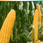 AgriSmart