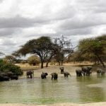 Alphadean tours and safaris