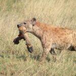 Traveledward Tanzania safari