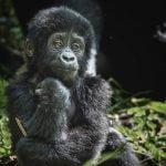 Kabira Gorilla Tours
