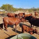 All Livestock Trade